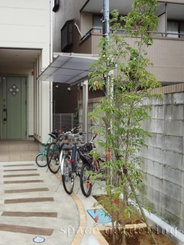施工例画像:庭木 常緑ヤマボウシ 植栽 庭木 常緑樹 常緑ヤマボウシ この現場の施工例をもっと見