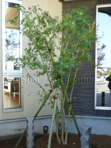 施工例画像:庭木 落葉樹 モミジ 植栽 庭木 落葉樹 イロハモミジ この現場の施工例をもっと見る