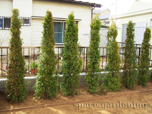 施工例画像:目隠し 庭木 柏市  目隠し 植栽 庭木 常緑樹 コニファー この現場の施工例をもっ